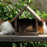Cat in bird house